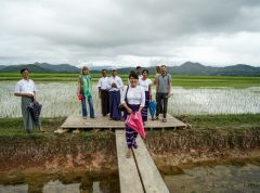 Visiting of experimental rice fields around Myeik, in front: ITT Alumna May Phyoe Way (Foto: A. Fekete)